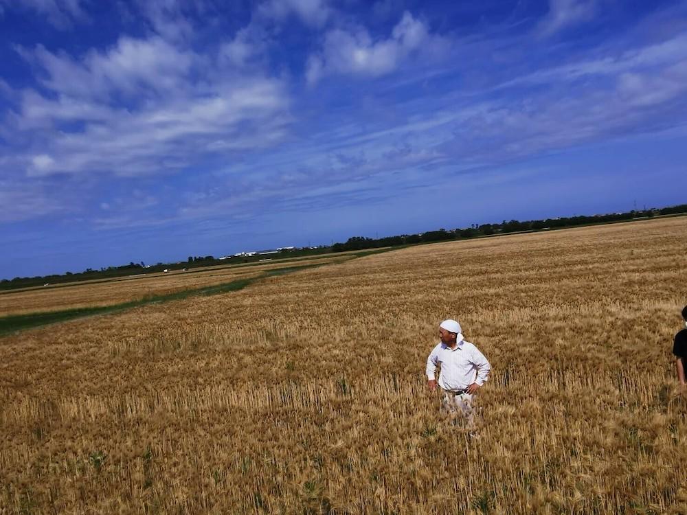 わくわく手づくりファーム川北の麦畑